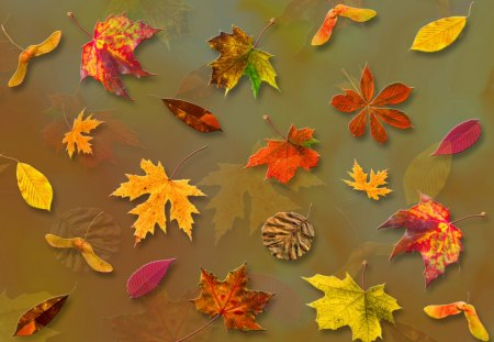 ♥     Falling Leaves     ♥ - leaves, falling leaves, collages, abstract, forest, nature, autumn, park, fall