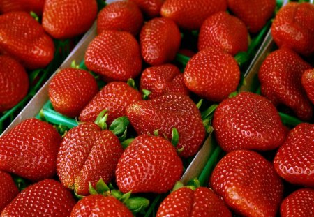 *** My Lovely Strawberries *** - fruits, color, red, strawberries