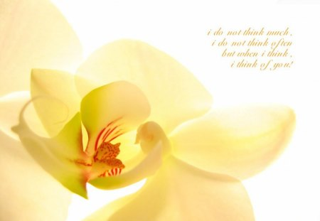I think of you - saying, orchid, you, quote, love, life, yellow