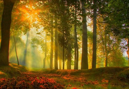 Morning fog - shadow, morning, trees, field, fall, autumn, fog, forest, nature
