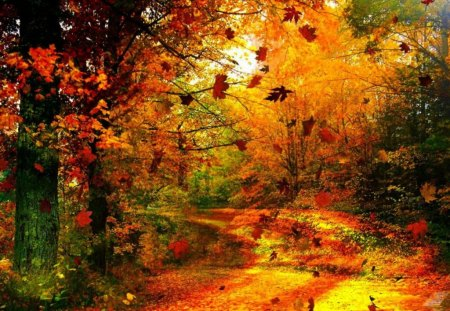Autumn forest - beautiful, pretty, path, autumn, nice, forest, red, foliage, trees, colorful, colors, lovely, golden, leaves, sunny, park, nature