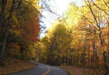 smokey mountains, tn - trees, road, mountain, nature, forest, fall