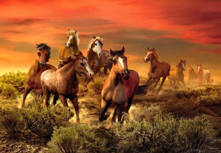 The wild bunch - wilderness, beautiful, meadow, nice, wild, grass, fiery, ride, field, sky, bunch, brown, lovely, clouds, horses, nature, fire