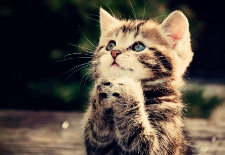 Please!!! - Cats & Animals Background Wallpapers on Desktop Nexus ...