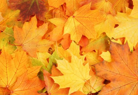 Autumn Leaves - beautiful, leaf, pretty, lovely, beauty, fall, autumn, autumn colors, leaves, photography, autumn leaves, nature