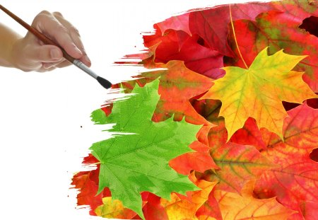 Autumn - photography, painting, brush, sweet, autumn time, autumn, autumn leaves, hand, nature, beauty, beautiful, lovely, leaf, drawing, pretty, autumn colors, leaves
