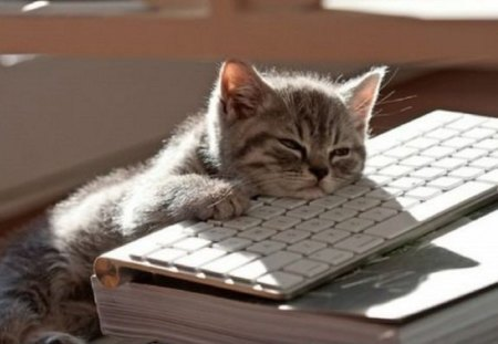 How I look right now ? - animals, on a keyboard, cats, cute, kitty