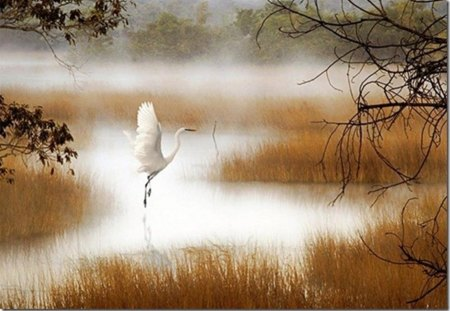 a dance of the Stork - painted, water, stork, beautiful, autumn