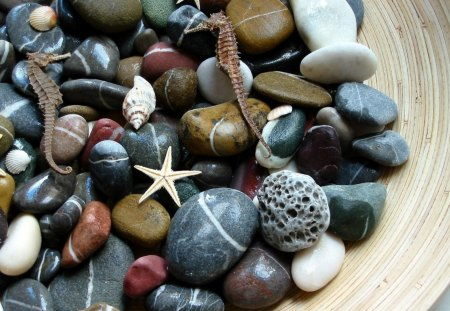 Aquatic Stones - water, aquatic, rocks, nature, stones, seashells