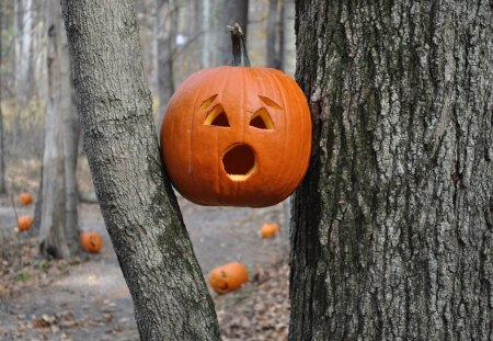HELP !!!! - trees, horror, forest, pumpkins, autumn