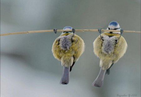 pullup birds - funny, abstract, animals, birds