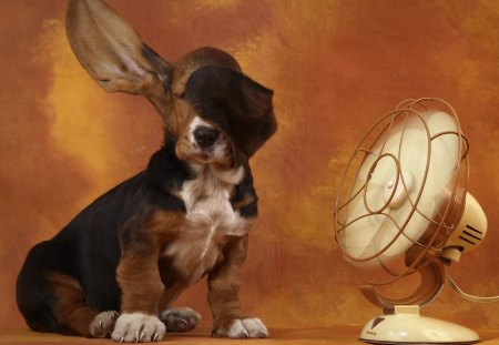 The Basset Hound and the Breeze - lindo, fun, blowing ears, basset, animal, fan, fiel, natureza, cachorro, basset hound