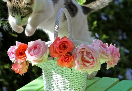 troubles - roses, basket, cat, vase, trouble