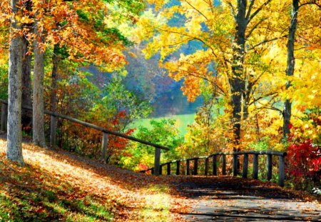 gorgeous autumn scenery forests amp nature background