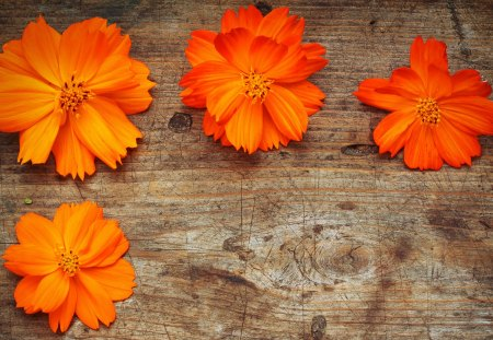 orange flowers  flowers  nature background wallpapers on desktop, Beautiful flower