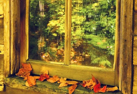 Autumn window - window, beautiful, delight, pretty, path, view, fall, autumn, falling, nice, forest, foliage, trees, colorful, lovely, leaves, wooden, park, nature