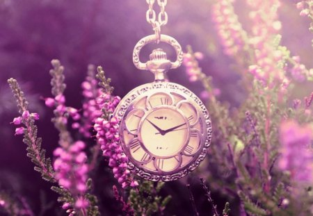 still life - pocket, lavender, garden, watch