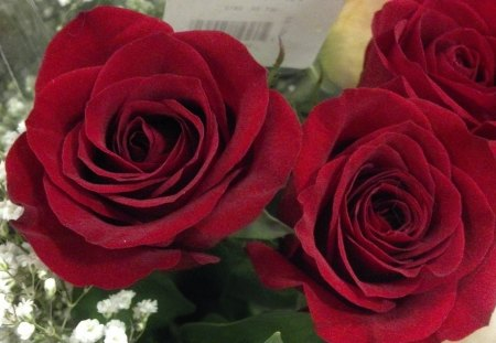 Rosey red rose flowers nature background wallpapers on for Do black roses really exist