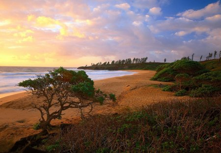 A Perfect View - sunset, ocean, sky, perfect, a perfect view, clouds, shrubs, sea, beach, view