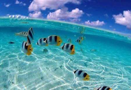 Clear Pool Water Wallpaper colorful fish enjoying this clear pool - fish & animals background