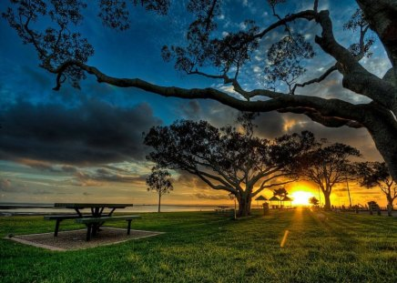 Twilight - sunset, golden, grass, peaceful, tree, bench