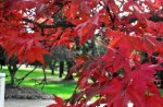 Ravishing Autumn Red