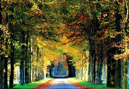Colorful forest road - Forests & Nature Background ...