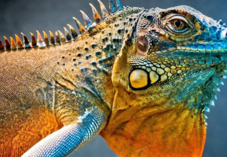 Image result for tropical lizard