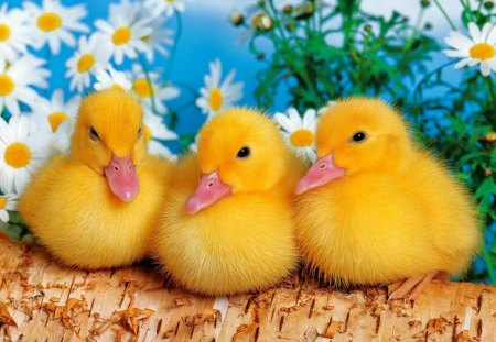 Cute friends - Ducks & Animals Background Wallpapers on ...