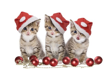 Christmas Cats - cat eyes, animals, balls, beautiful, red balls, adorable, pretty, beauty, hats, xmas, magic, magic christmas, magoc, eyes, red, red ball, paws, hat, cats, cute, lovely, merry christmas, cat face, christmas, ball, kitten, cat, christmas balls, kitty, sweet