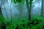 Lush Tropical Forest in Fog