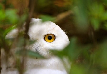 Owl - leaves, branch, owl, watching, tree, nature, eyes, bird, twig, white