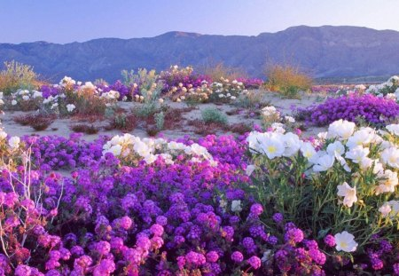 Field Of Dreams Flowers Purple Landscapes Horizons Mountains