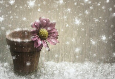 winter flower  flowers  nature background wallpapers on desktop, Beautiful flower