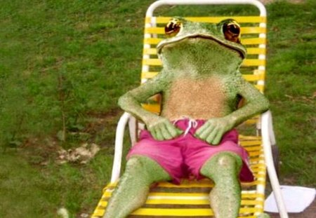 Greenfroggy sun bathing frogs animals background wallpapers on desktop nexus image 1233273 - Funny frog pictures ...