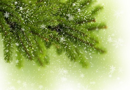 Snowflakes - green, winter time, beautiful, pretty, lovely, tree, merry christmas, xmas, beauty, magic, snowflakes, snow, nature, winter, christmas tree, snowy