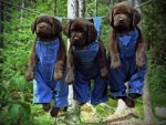 Dogs in coveralls