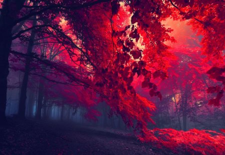 Dark red forest - beautiful, trees, mist, lovely, path, enchanted, mystic, fall, magic, autumn, leaves, dark, nice, forest, nature, dusk
