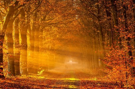 autumn rays   forests amp nature background wallpapers on