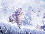 leopards_in_the_snow