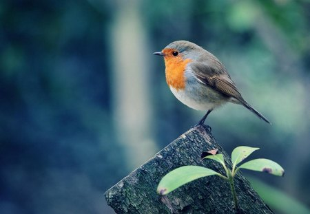 Beautiful Birds - animal, wood, forest, birds