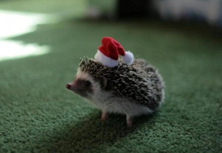 christmas animals - cute, animals, christmas, other