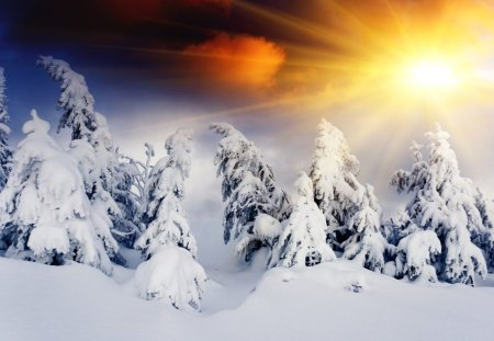 Winter Sun - splendor, hill, amazing, beautiful, tree, view, beauty, sunrays, magic, magic winter, landscape, winter splendor, winter sunset, sunset, snowflakes, snow, mountains, snowy, sunrise, winter time, rays, trees, sky, lovely, sunlight, winter sun, clouds, nature, sun, peaceful, hills, winter