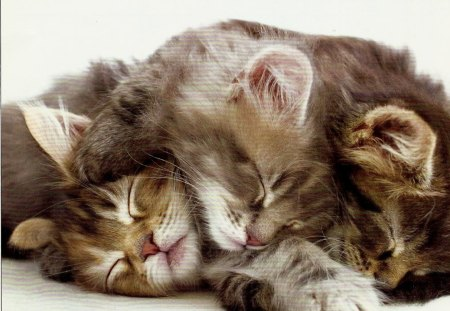 three kittens sleeping on top of each other cats animals background wallpapers on desktop. Black Bedroom Furniture Sets. Home Design Ideas