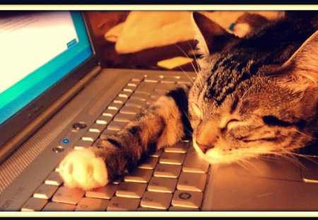 All Work & No Play... - laptop, nap, cute, catnap, computer, sleep, kitten, cat, dell, kitty, snooze