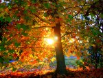 Magnificent Autumn Sun