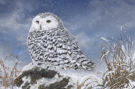 cute snowy owl fantasy amp abstract background wallpapers