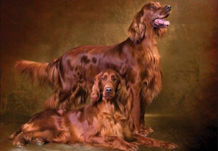 irish setters wallpaper download - photo #13