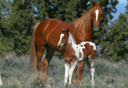 horse cute horses comments animals