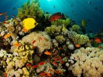 Coral Reef and Exotic Fish